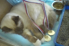 Our Inter Champion is sleeping